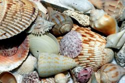 How to Find the Best Seashells on Siesta Key || Vacation Condos on Siesta Key || Crystal Sands
