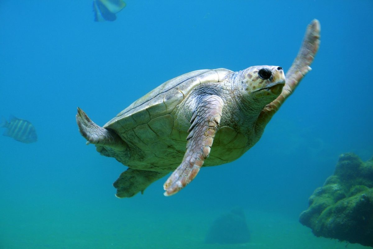 When it comes right down to it, the sea turtles are some of our oldest and most captivating animal friends