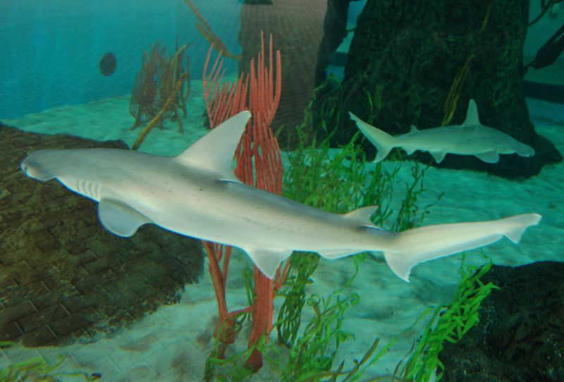 The 135,000-gallon shark tank features the epic Goliath grouper and a variety of shark species