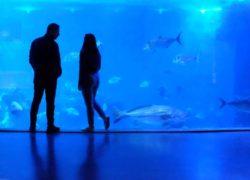 siesta key aquarium