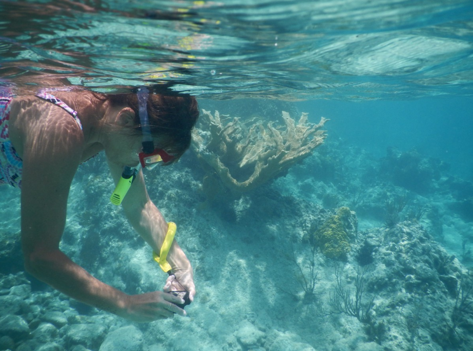 There are so many fun water-related activities for you to try during your 2-week condo rentals on Siesta Key. Siesta Key snorkeling tours are easy to find.