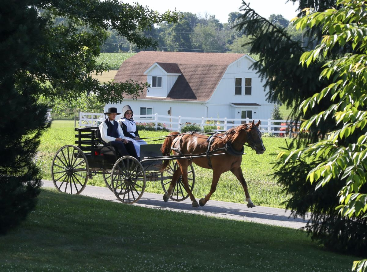 amish couple in buggy