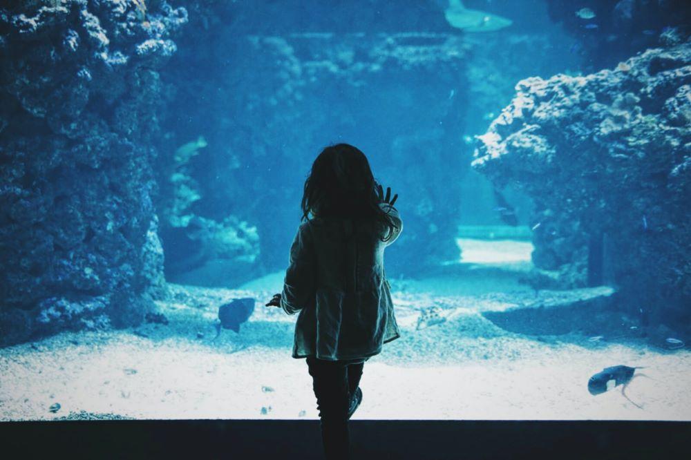 little girl touching aquarium