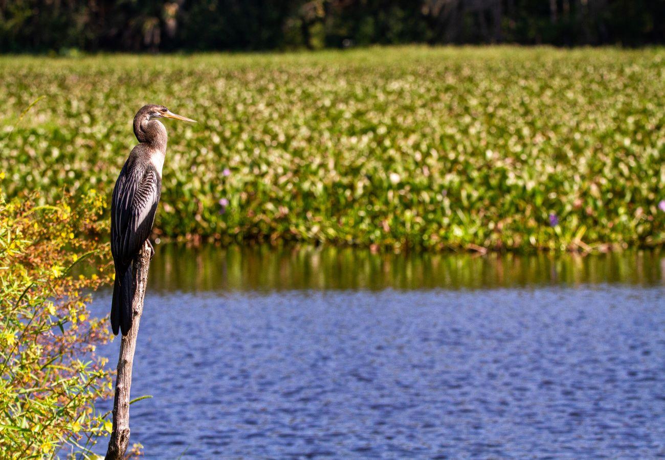 bird by water in siesta key